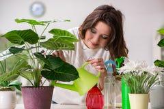 Die kümmernden Anlagen der jungen Frau zu Hause lizenzfreie stockfotos