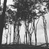 Die Küste mit Bäumen Stockfotos