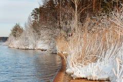 Die Küstenlinie und das Schneegras am eisigen Wintertag Lizenzfreies Stockbild