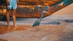Die Küstenreiher-Jagden für Fische auf dem Strand des Roten Meers in Ägypten Langsame Bewegung stock video