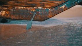 Die Küstenreiher-Jagden für Fische auf dem Strand des Roten Meers in Ägypten Langsame Bewegung stock footage