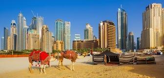 Die Kamele auf Jumeirah-Strand und Wolkenkratzer im backround in Dubai stockfoto