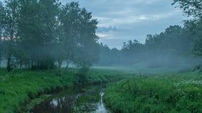 Die Kamera nimmt die Bewegung des Spurwaldes mit Bäumen, grünem Gras und Nebel gefangen stock video footage