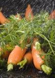 Die Karotten u. der Regen Lizenzfreies Stockfoto