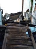 Die Katze über dem alten Ruinengebäude Lizenzfreies Stockfoto