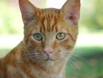 Die Katze Stockfotografie