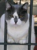 Die Katze Lizenzfreies Stockbild