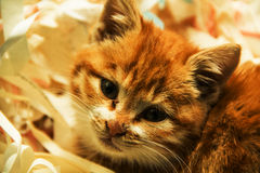 Die Katze stockbild