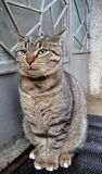 Die Katze Lizenzfreie Stockfotos