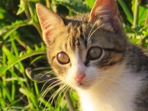 Die Katze Lizenzfreie Stockbilder