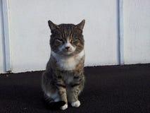 Die Katze Stockfoto