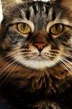 Die Katze Stockfotos