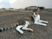 Die Katze Stockbilder