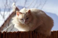 Die Katze aalt sich im Winter in der Sonne lizenzfreie stockbilder