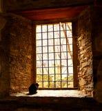 Die Katze, die auf das Licht wartet lizenzfreie stockfotos