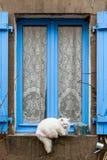 Die Katze auf dem blauen Fenster stockfotos