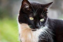 Die Katze auf dem Horizont lizenzfreies stockfoto