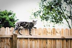 Die Katze auf dem Zaun stockbilder