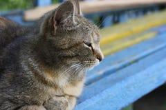 Die Katze auf der Bank Lizenzfreies Stockfoto