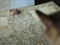 Die Katze betrachtet den goldenen Baum-Frosch Lizenzfreies Stockbild