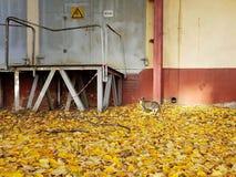 Die Katze betrachtet die Tür mit einem Warnzeichen lizenzfreie stockfotos