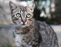 Die Katze der getigerten Katze Lizenzfreies Stockbild