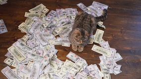 Die Katze der Reichen stock footage