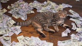 Die Katze der Reichen stock video