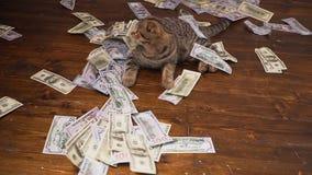 Die Katze der Reichen stock video footage