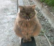 Die Katze in der Straße ist grünäugig Lizenzfreies Stockfoto