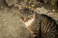 Die Katze, die auf der Straße sitzt Stockfotografie