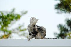 Die Katze, die auf der Wand sitzt, werden verkratzt Stockfotos