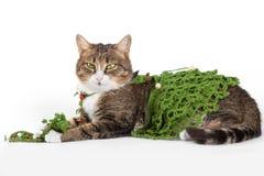 Die Katze, die einen Weihnachtsbaum trägt, ist auf Weiß Stockfotografie
