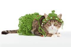 Die Katze, die einen Weihnachtsbaum trägt, wird auf Weiß lokalisiert Stockfoto