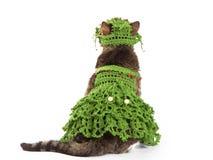 Die Katze, die einen Weihnachtsbaum trägt, wird auf Weiß lokalisiert Lizenzfreie Stockfotografie
