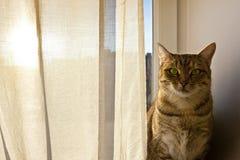 Die Katze, die in Kamera anstarrt und sitzt auf dem Fensterbrett Stockfotografie