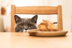 Die Katze, die am Tisch sitzt lizenzfreie stockfotos
