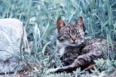 Die Katze, die im Gras hob stillsteht besorgt, ihren Kopf lizenzfreies stockfoto