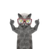 Die Katze ist hungrig und das Lebensmittel, die in seinen Gläsern reflektiert wird Stockfotos