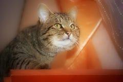 Die Katze kriecht vorsichtig oben und schaut ahead_ lizenzfreies stockbild