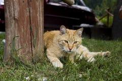 Die Katze liegt auf dem Gras lizenzfreie stockbilder