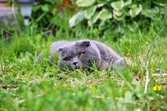 Die Katze liegt auf dem Gras Stockbilder
