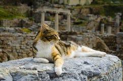 Die Katze liegt auf den Ruinen Lizenzfreies Stockfoto