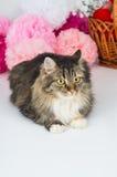 Die Katze liegt auf einem Hintergrund von hellen Papierblumen Stockfotografie