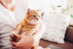 Die Katze liegt auf einem Kissen zu Hause nahe seinem Meister lizenzfreie stockfotos