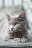 Die Katze liegt auf einem Sofa Lizenzfreies Stockbild