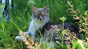 Die Katze liegt im Gras stock video footage
