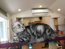 Die Katze liegt am Rand des Balkons stockbilder