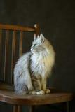 Die Katze - Mädchen Lizenzfreie Stockfotografie