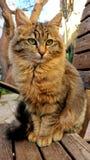 Die Katze mit den grünen Augen auf dem stret stockfotografie